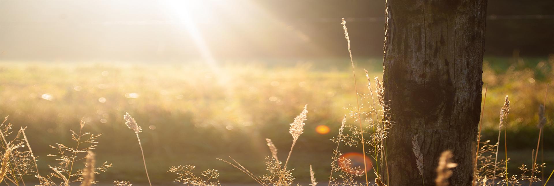 1_field-summer-sun-meadow_1920x647px